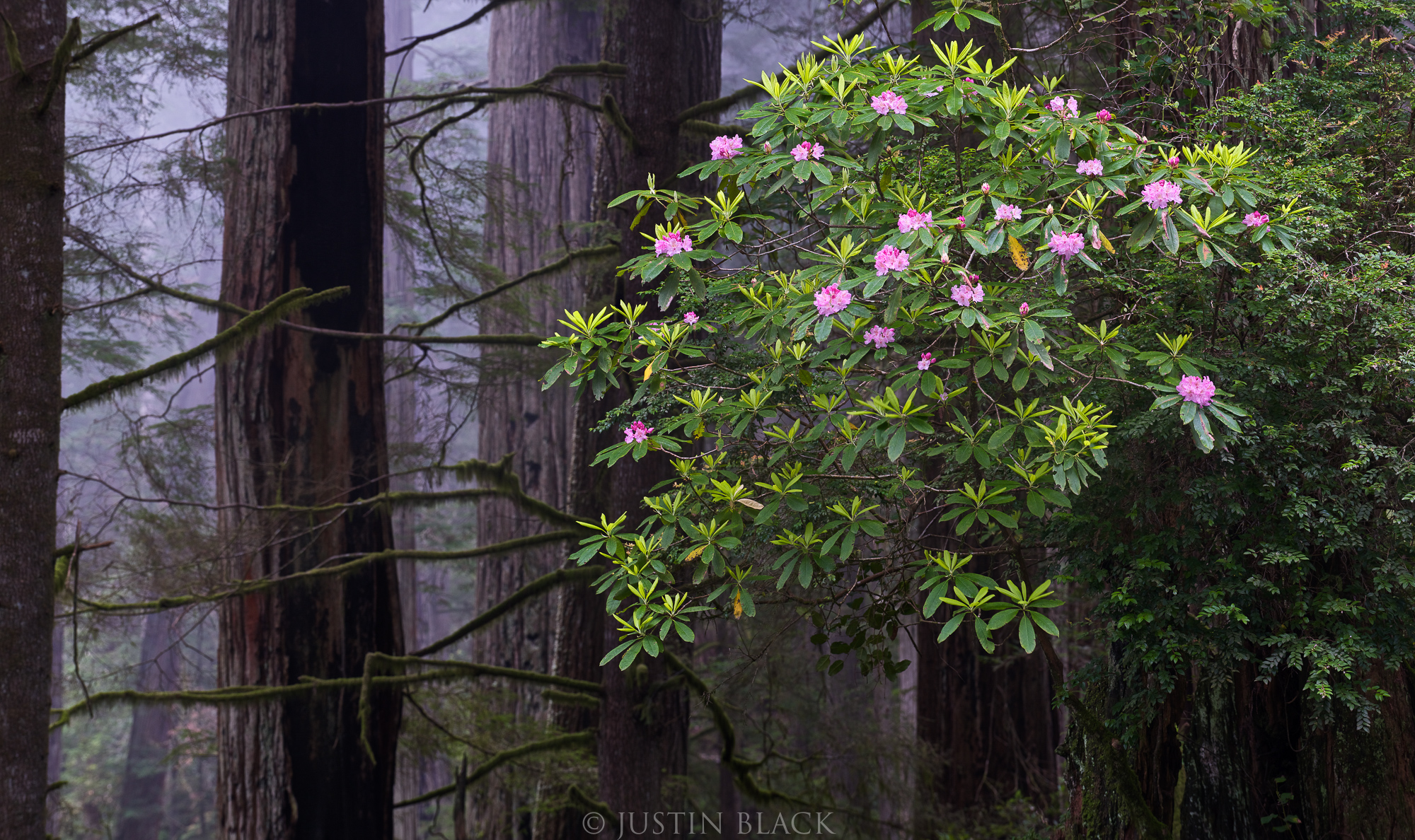 what to photograph redwood coast 2 image