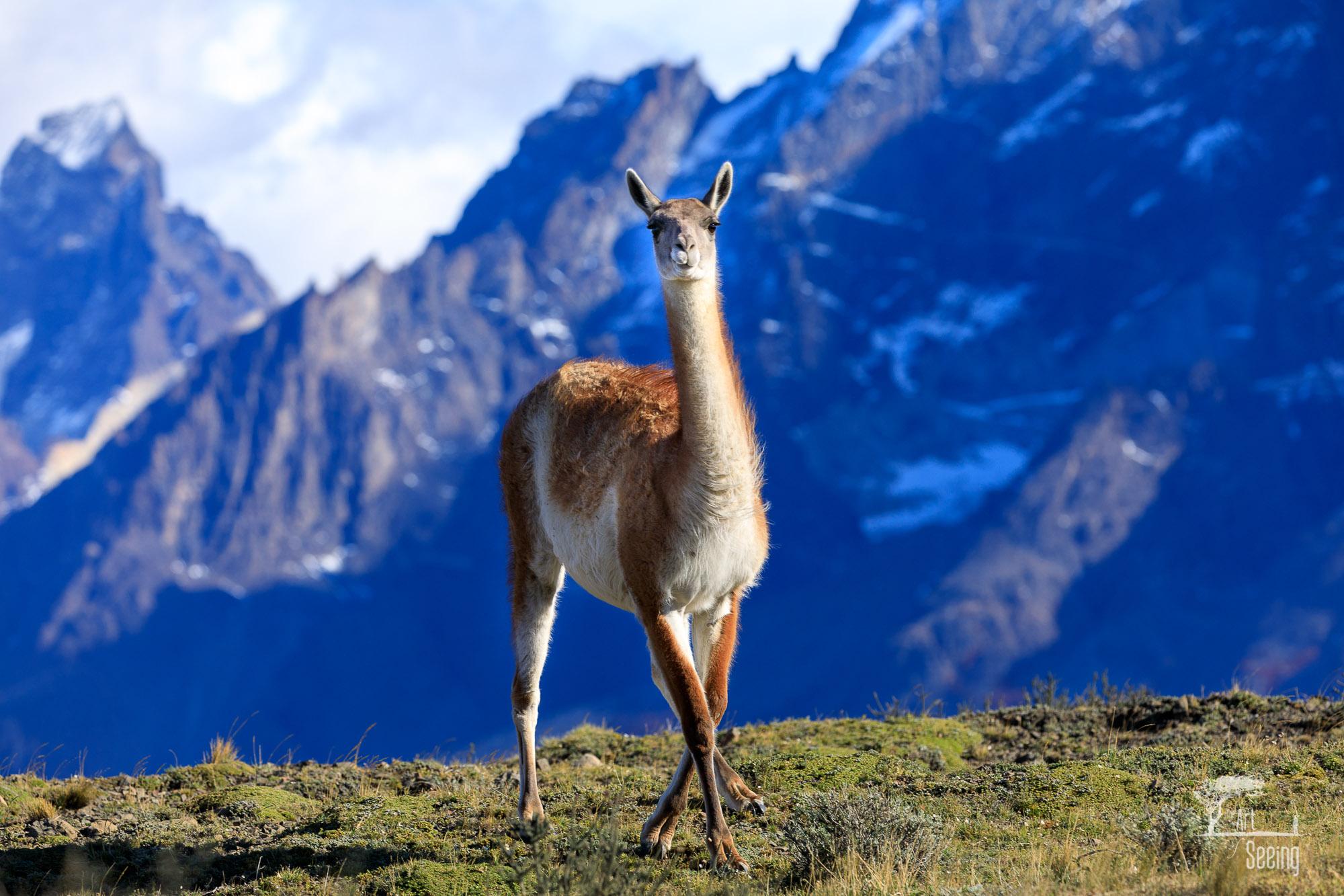 patagonia photography 1 image