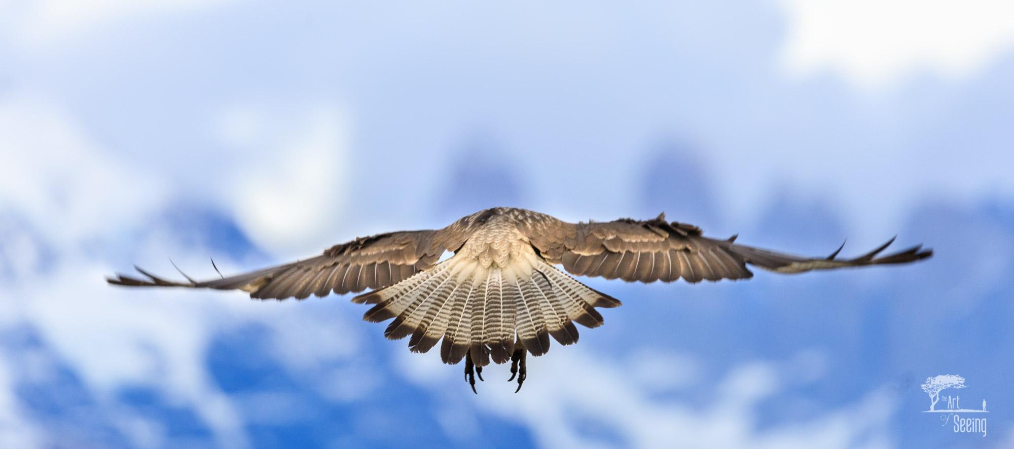 patagonia photography 2 image