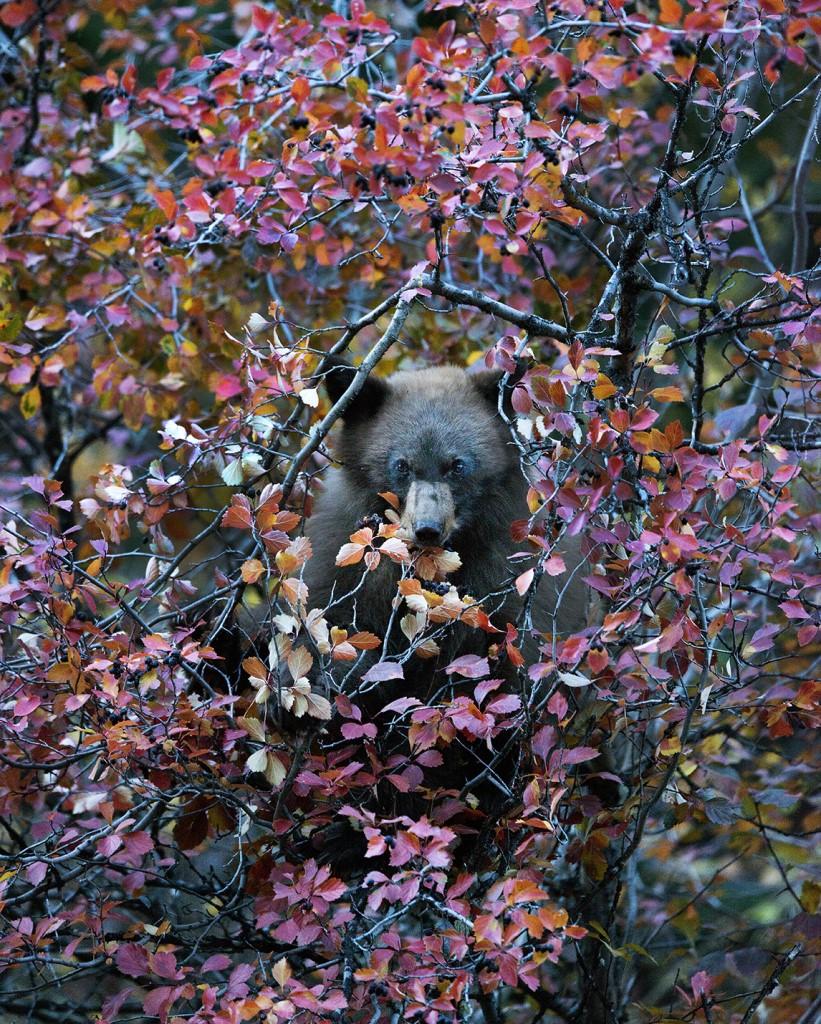 grand teton national park Wildlife photography 1 image