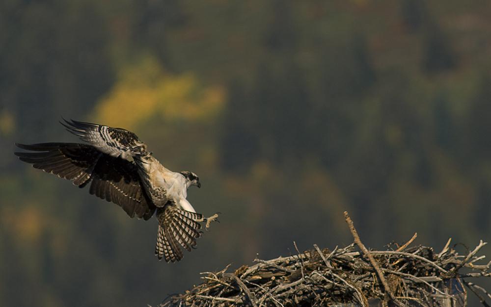 grand teton national park Wildlife photography 3 image