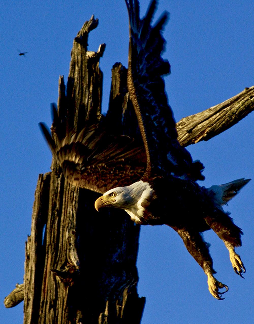 grand teton national park photography guide 2 image