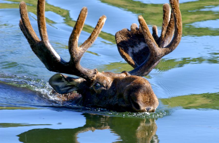 grand teton national park photography guide 4 image