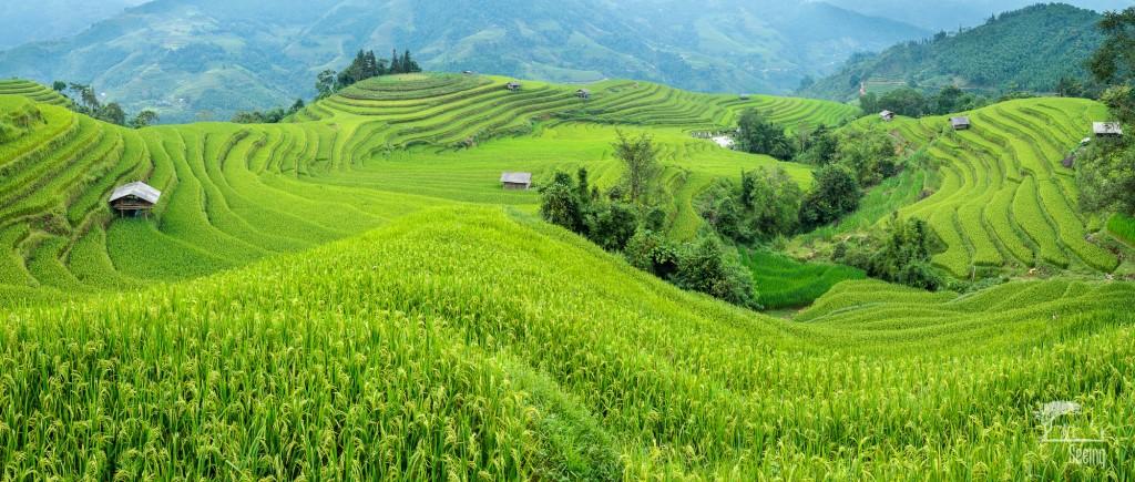 rice fields 1 image