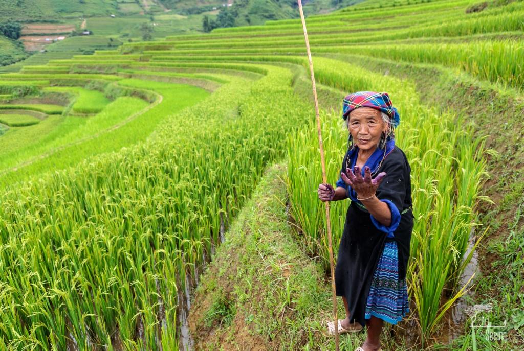 rice fields 2 image