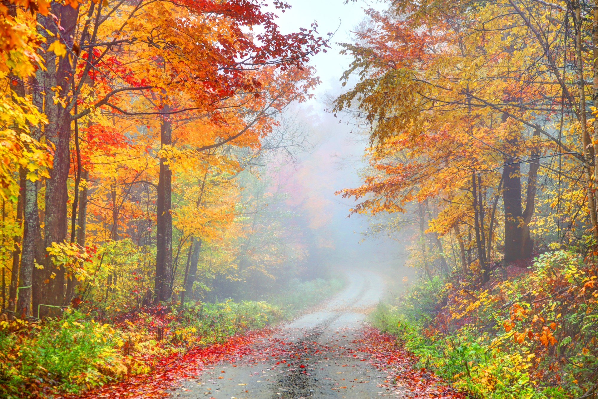 foliage fall autumn tips vermont istock denistangneyjr via