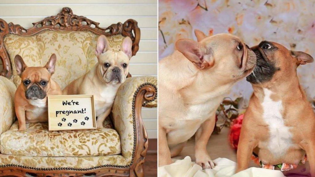 dog maternity photos image