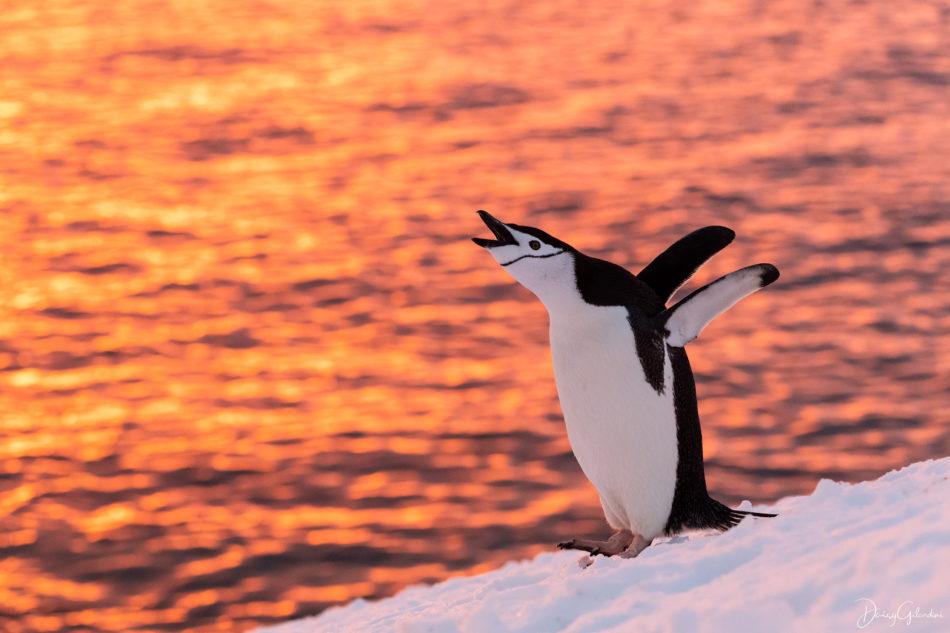 antarctica 2 image