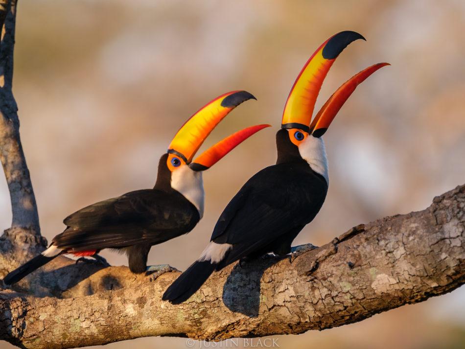 Photograph Birds in Brazil 1 image