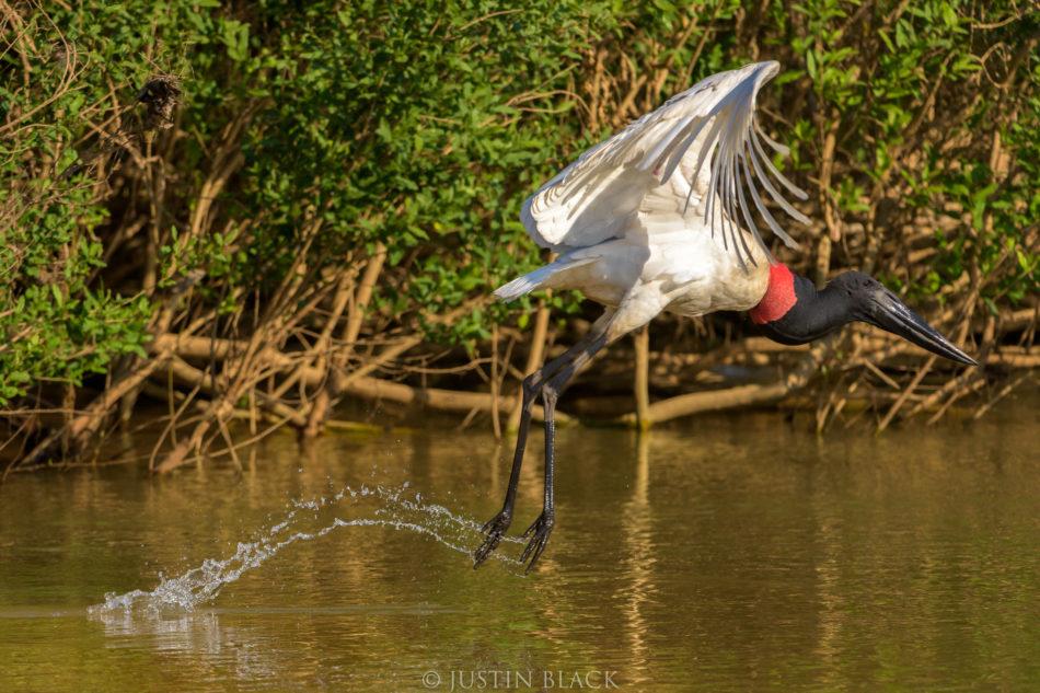 Photograph Birds in Brazil 2 image