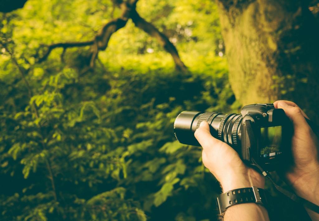 Top Beginner Cameras for 2019 image