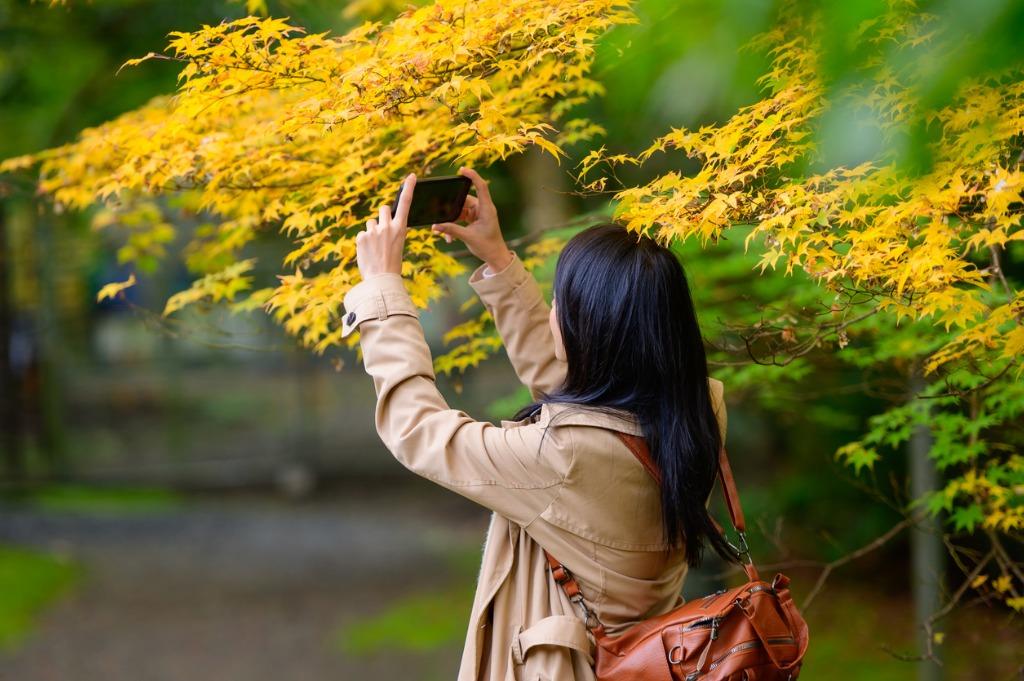 basic photography tips 5 image