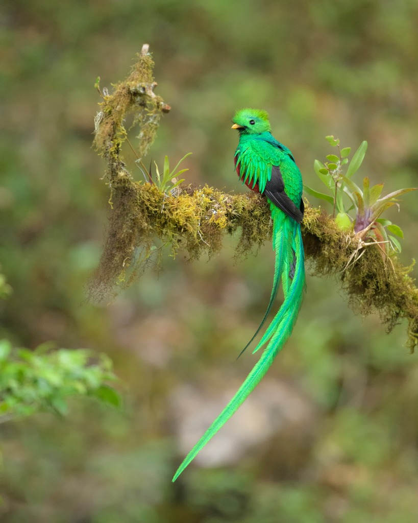 what to photograph in costa rica birds image