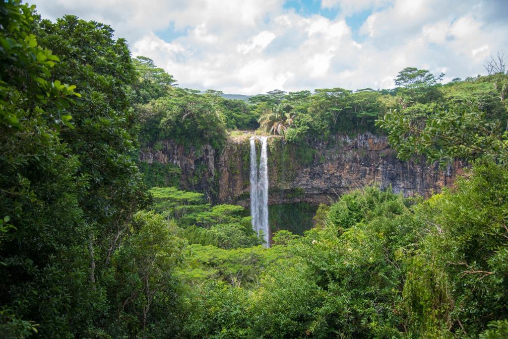 jungle photography 1 image