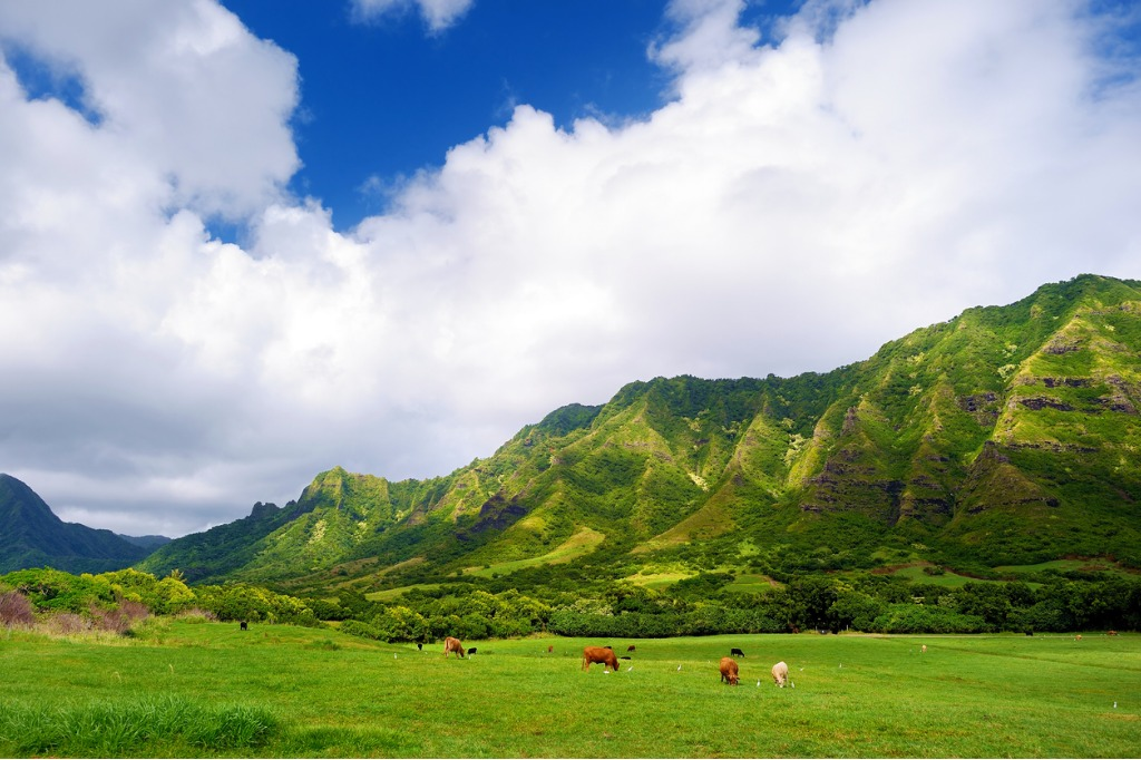 travel tips for hawaii 11 image
