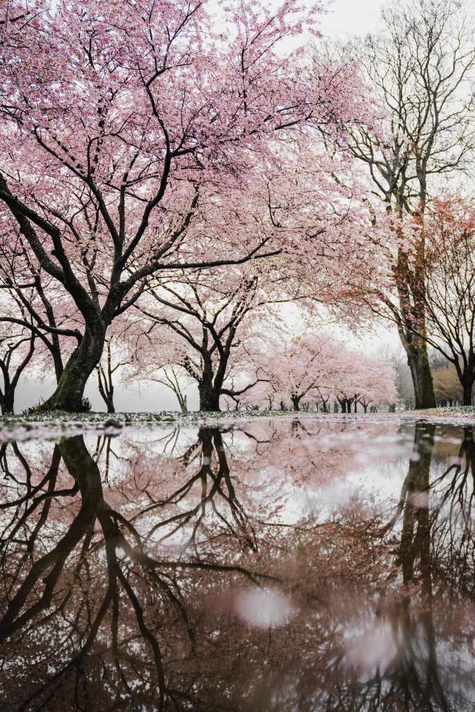 Quick Easy Spring Photography Tips image