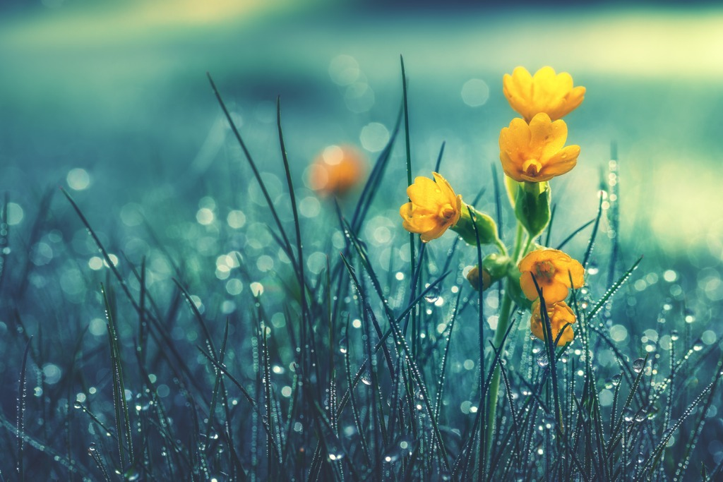 flower photography tips 5 image