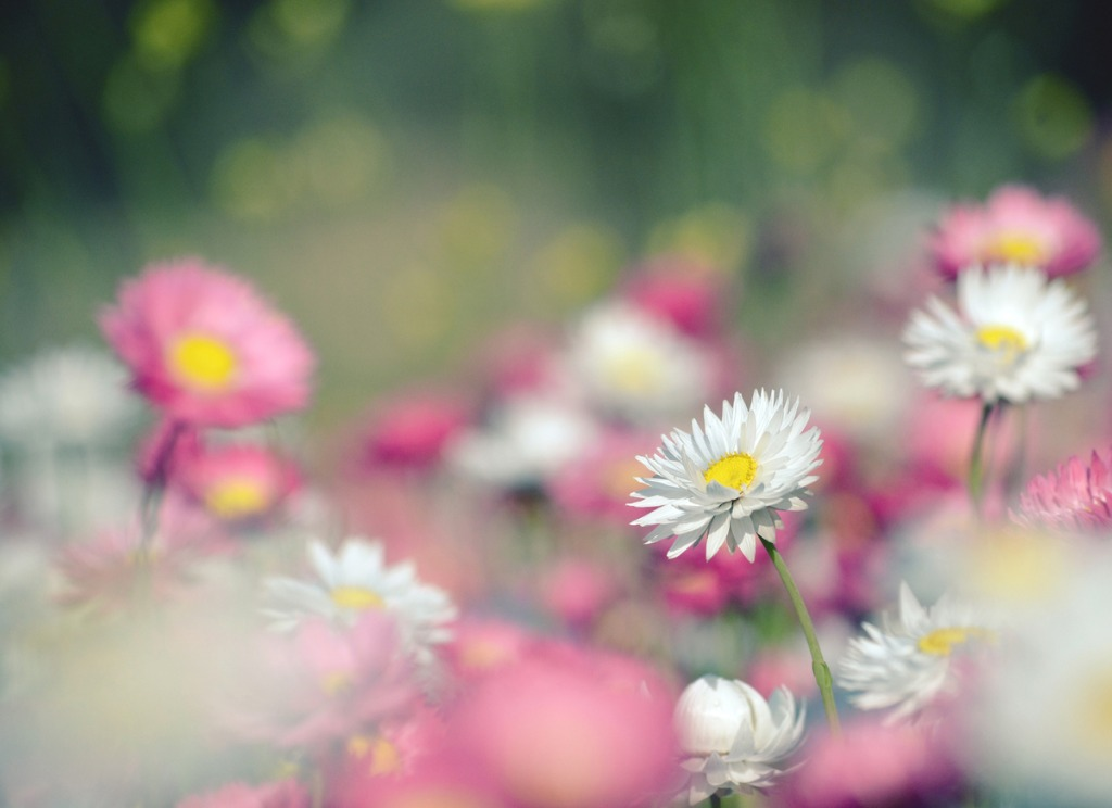 spring photography tips 1 image