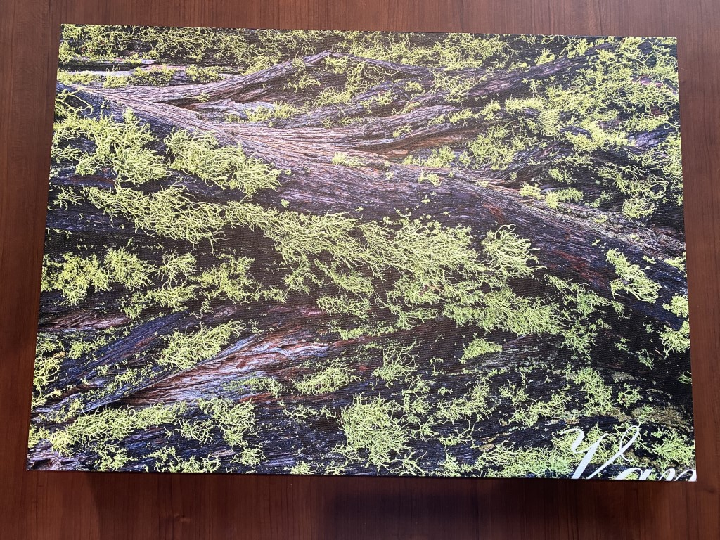 canvas on demand canvas print review image