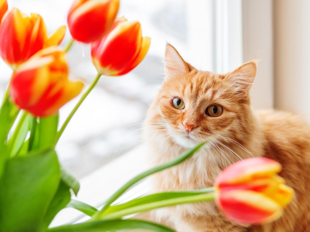 Pet Portrait Lighting Tips image