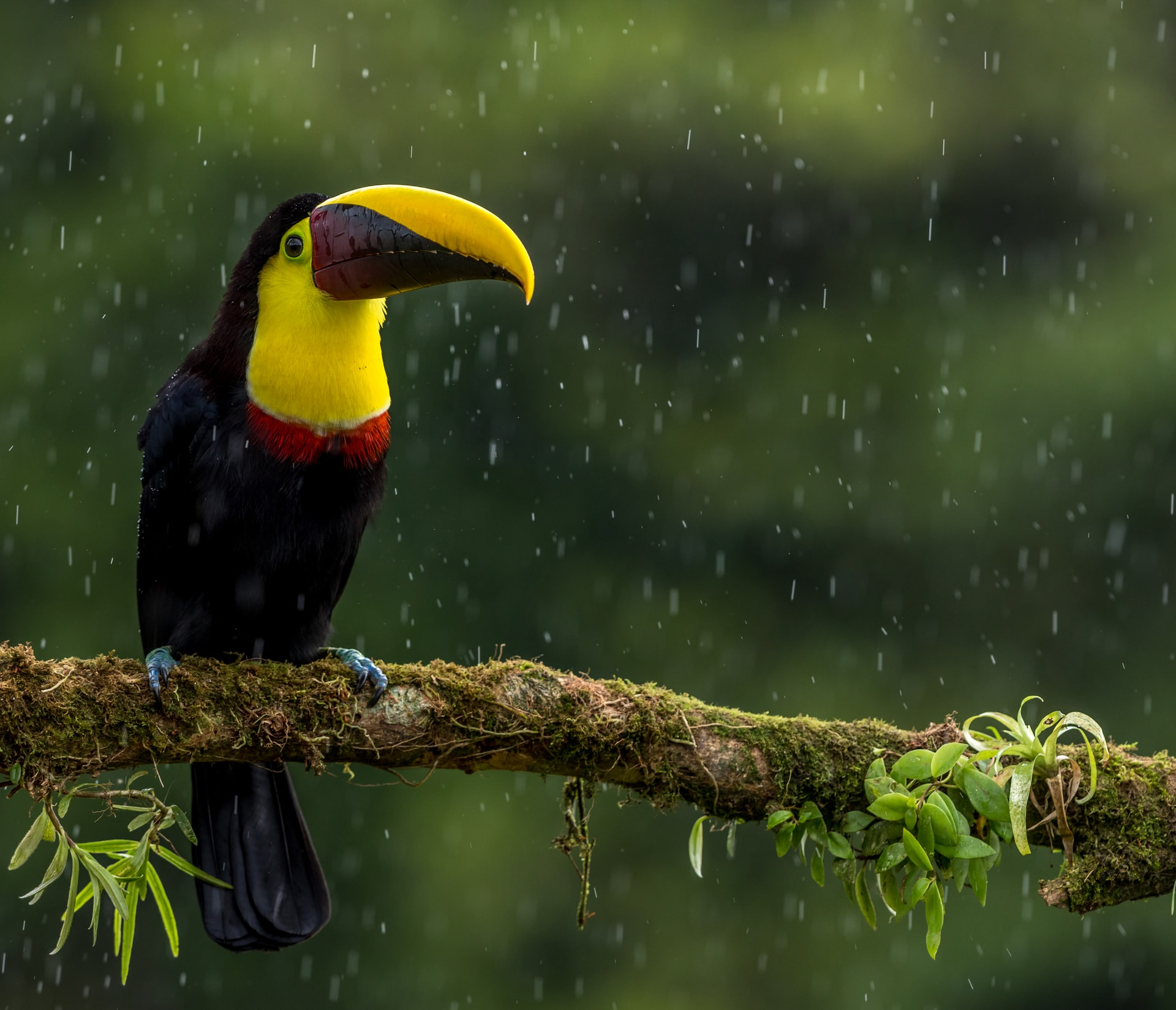 costa rica photography tour 1 image