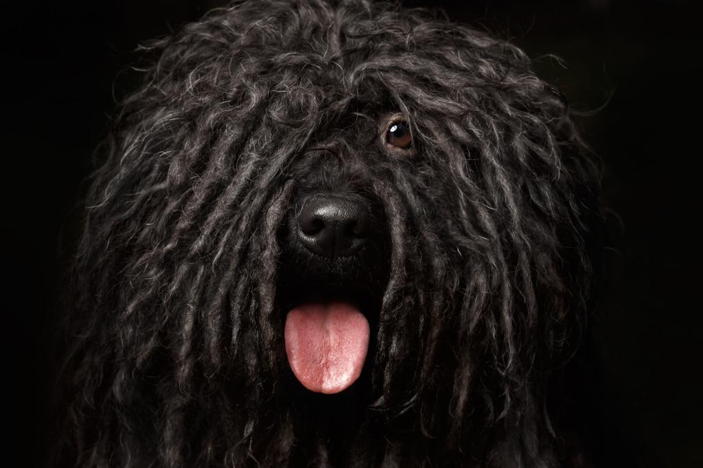 easy pet portrait lighting tips 6 image