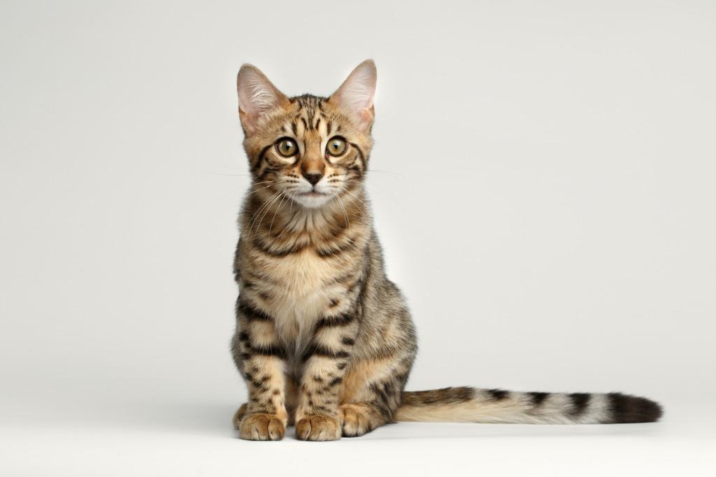 one light portrait tips for pets 4 image