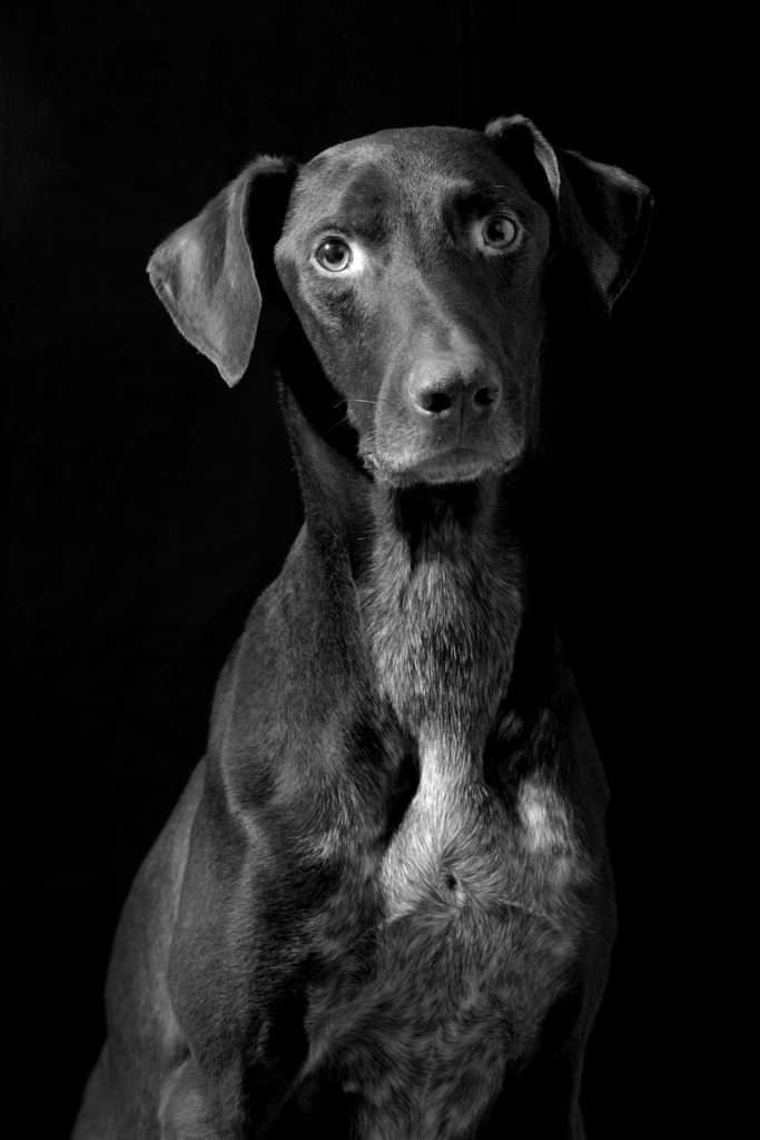 one light portrait tips for pets 5 image