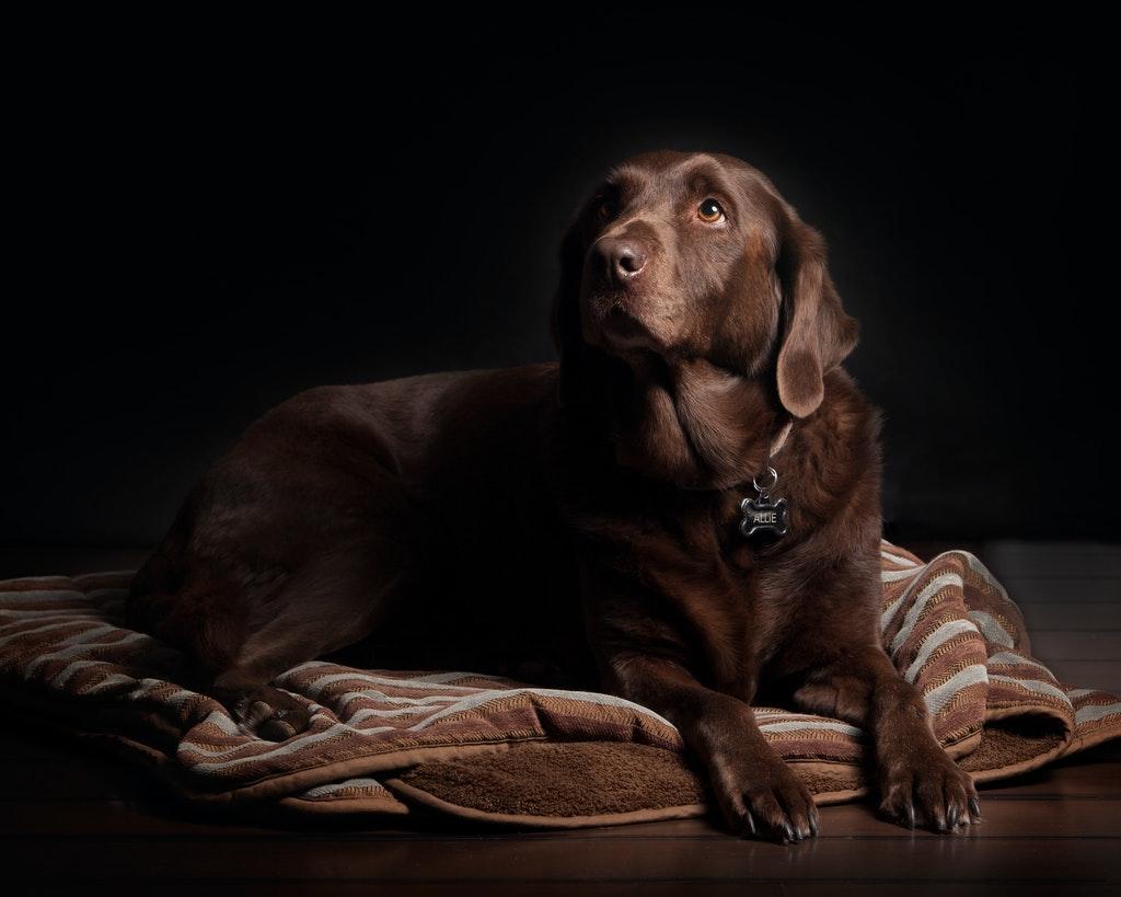 pet portrait lighting tips 3 image