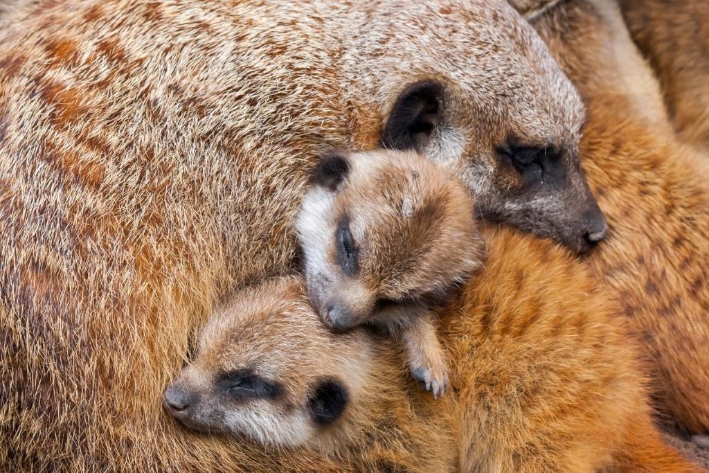 budget camera for wildlife photography 1 image