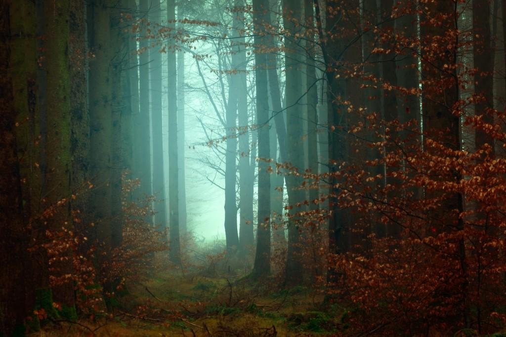 photographing fog 6 image