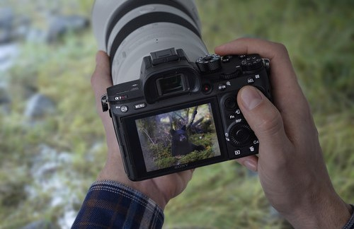 Sony a7R III Image Quality image