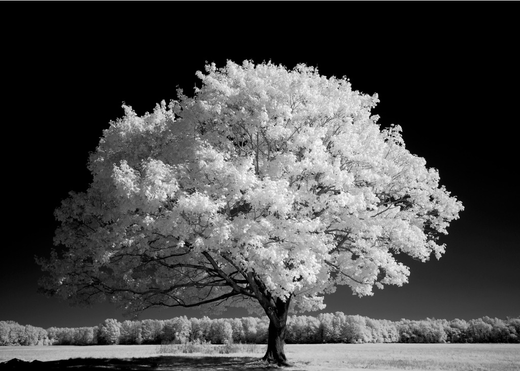 try infrared image