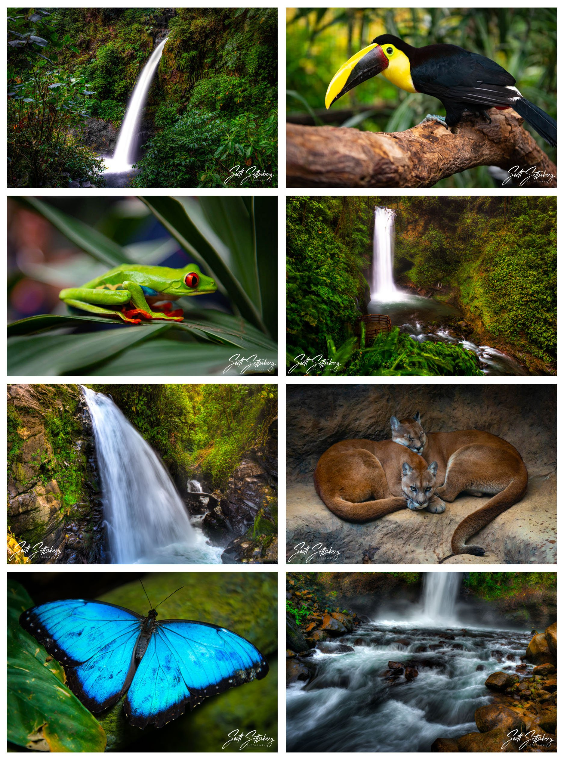 costa rica wildlife photography tips 1 image