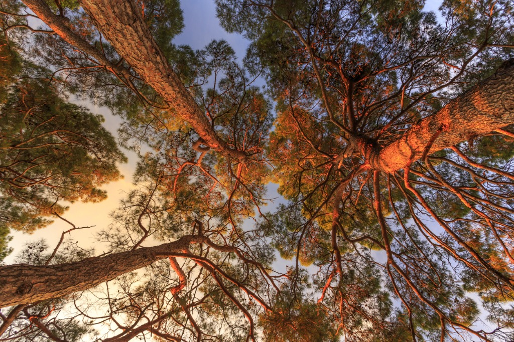 nature photography tips for beginners image