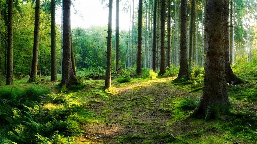 How to Crop Landscape Photos image
