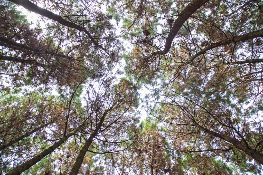 tips for photographing forests 2 image