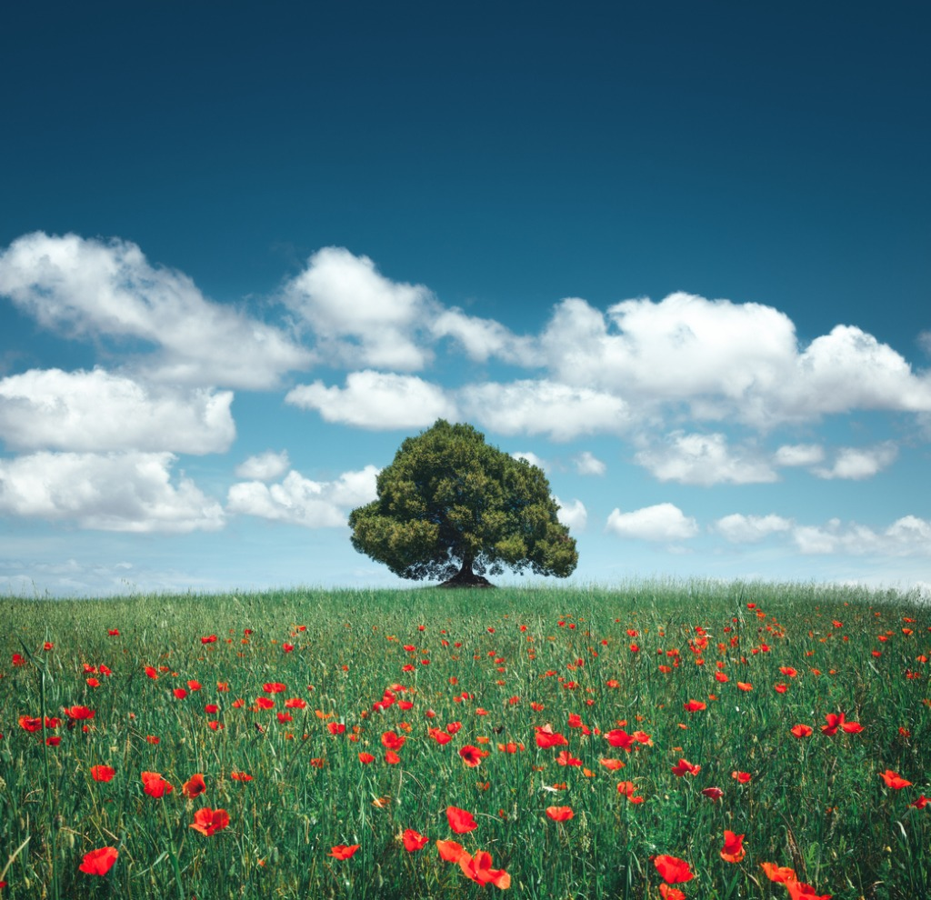 landscape photography tips 2 image