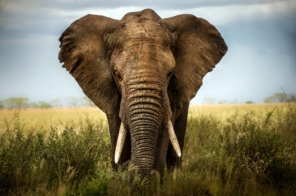 What is the Best Focal Length for Wildlife Photography image