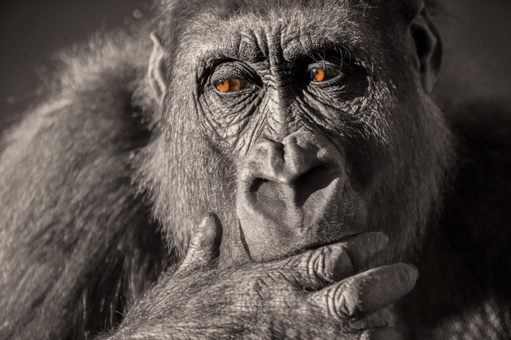 wildlife photography lenses image