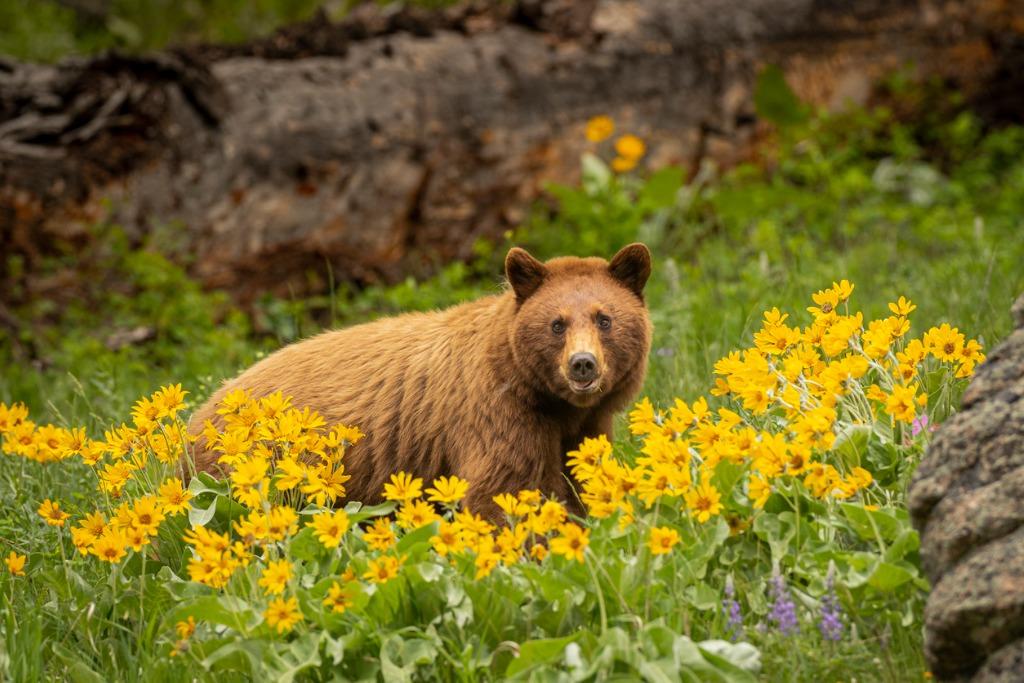 wildlife photography tips image