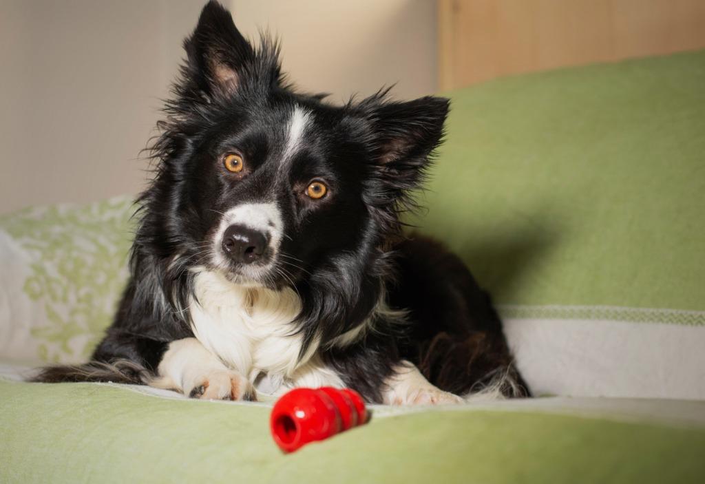 dog photography tips image