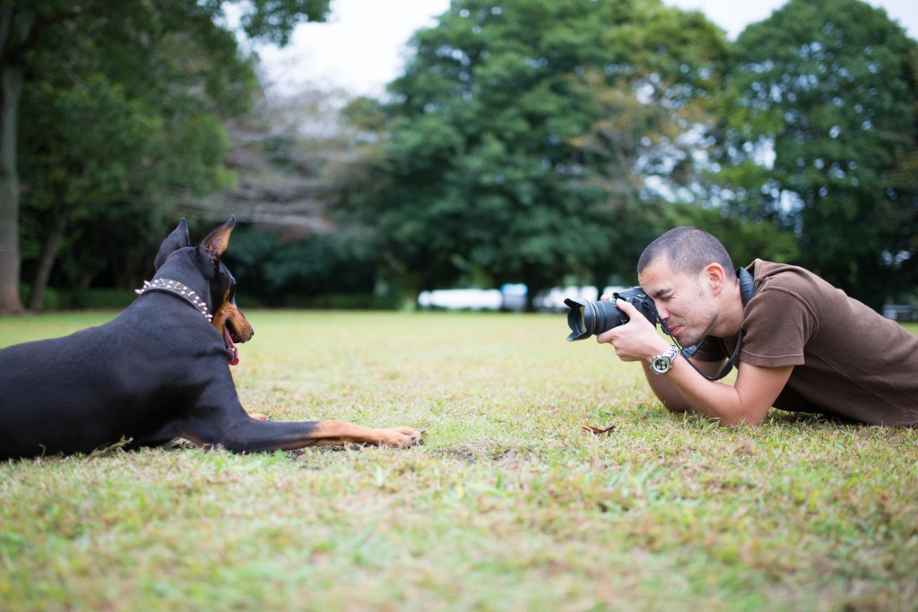 how to photograph dogs image