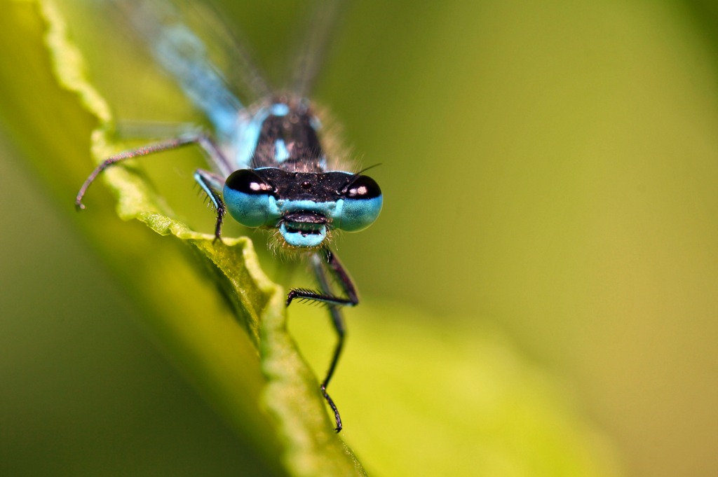 Macro Photography Composition Tips image