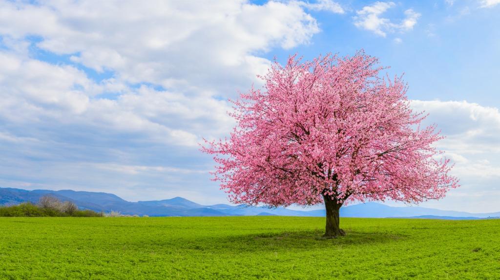 beginner landscape photography tips image
