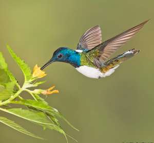 Photographing_Hummingbirds_with_Multiple_Flashes_html_m9f49e63 image