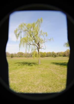 article_2363_dark_border_tree image