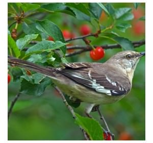 bird_photo image