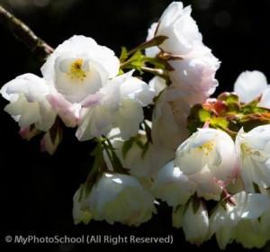 myphotoschool_1_thumb image