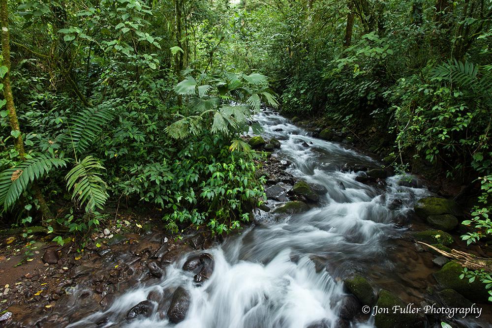Jungle Stream image